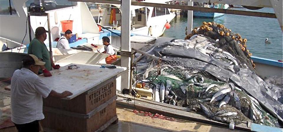 Crab fisheries snapper fisheries grouper fisheries mackerel fisheries